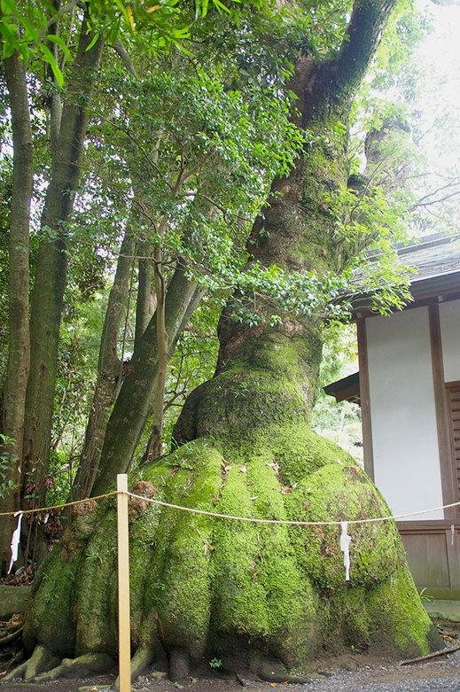 seichi1103.jpg