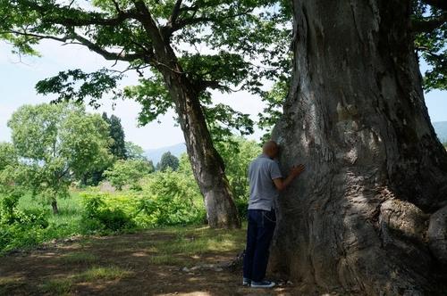 Tree2keyaki.jpg