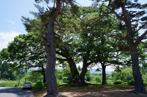Tree3keyaki.jpg