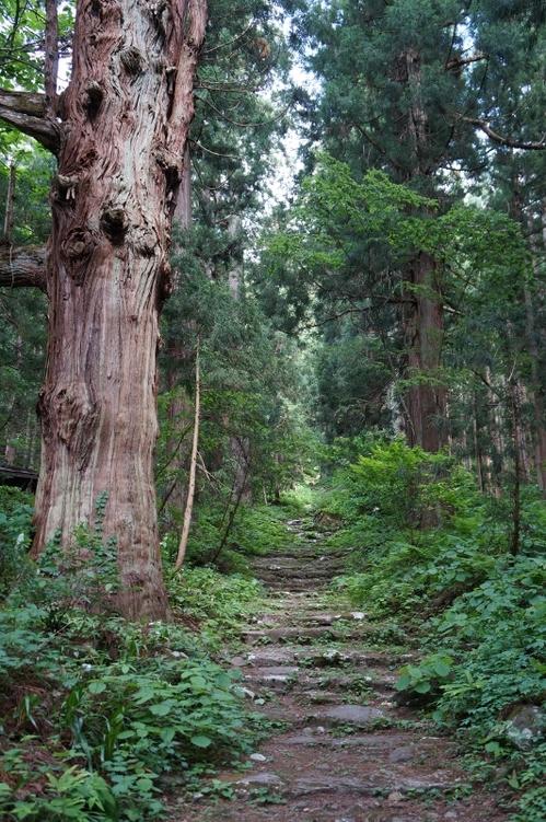 Tree5kosuge.jpg
