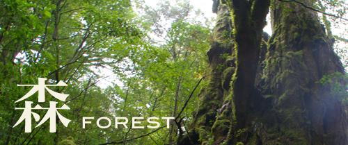 wonder07_forest.jpg