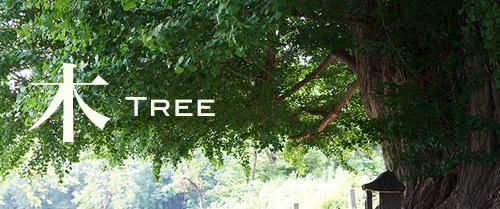 wonder21_tree.jpg