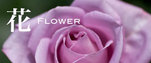 wonder22_flower.jpg